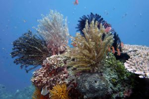 PADI DSD Discover Scuba Diving Carabao Philippines