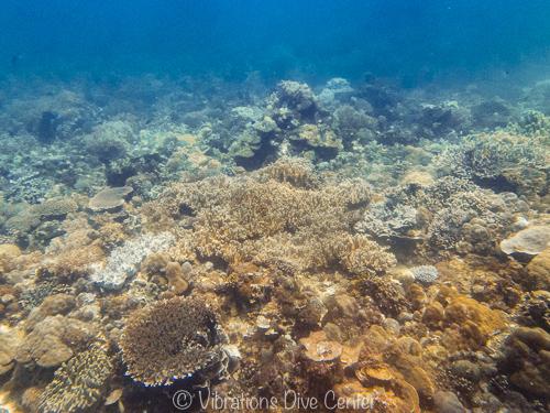 Sano arrecife de coral, vibrations, Isla de carabao, Filipinas.