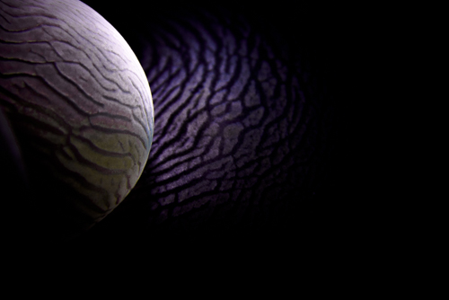 coral burbuja en fotografia macro