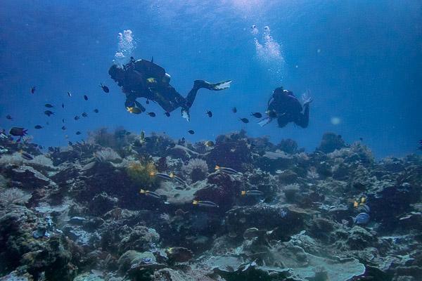 Plongée sur le récif à Carabao island Philippines.